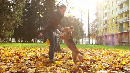 filhotes : Young female playing with beagle puppy dog in autumnal park Vídeos