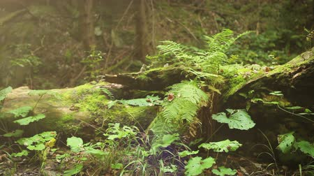 лиственный : Camera slide near old Tree Stump with Fern leaves