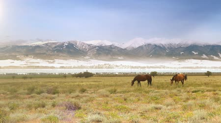 préri : Wild horses grazing on the meadow at the foot of snow-covered mountains Hight Definition Video: 29.97 FPS 14sec Please look another footages on my TrainArrival Account. Best Wishes. Stock mozgókép