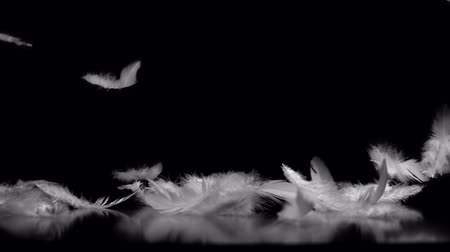 tek bir nesne : White feathers falling against black background with reflection Stok Video