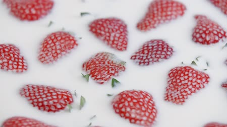 laktózy : Close up of fresh strawberry in milk. Summer berries in white cream