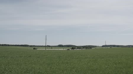 zaprášený : Green field and moving white car on dusty countryside road with forest horizon