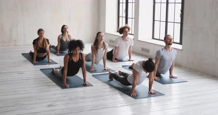 saudação : Indian trainer and diverse people do upward facing dog pose transitions into downward facing dog at morning work out at yoga class in sport studio, asana strengthens stretches body, wellness concept
