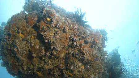 reefscape : A medium shot of a coral reef.  Tracking shot upward to show a large part of the coral reef.