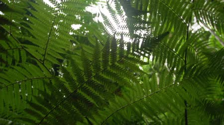 betel : A medium shot of leaves and trees on sunlight. Stock Footage