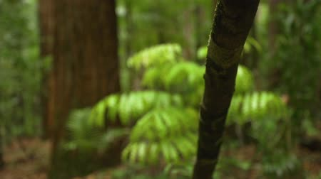 betel : A moving shot forward of a trees branch then pans to the left and tilts up to show the the whole tree. Stock Footage