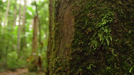 betel : A macro shot of moss on trees branch. Shot moves up