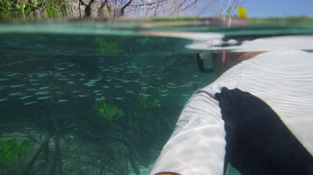 A medium shot of a diver underwater that is interacting with a school of fish. The diver also checks out the mangroves.