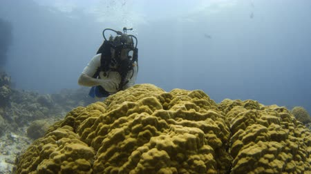 A shot of a scuba diver surrounded by big fish is examining a coral reef. The shot is taken in slow motion.