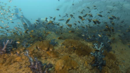 A shot from underwater showing a school of fish in sync on their movements. Dostupné videozáznamy