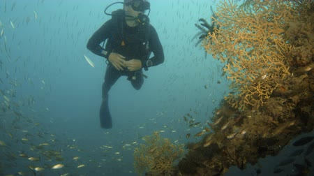 A scuba diver swims through large schools of fish and over coral reefs in a beautiful blue ocean. Dostupné videozáznamy