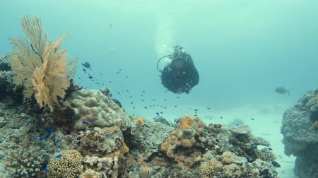 A moving shot to the right of a coral reef while a scuba diver crosses it.