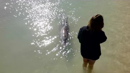 A slow motion shot of dolphin surfacing around a woman standing in water.