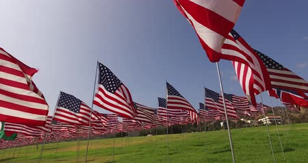 veteran's day : Set of American flags fluttering in the wind on the Memorial Day. Los Angeles, California, USA