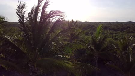 Aerial drone shot. The camera slowly flies over the coconut palms. Beautiful sunset on the coast of the Caribbean Sea. Riviera Maya, Quintana Roo, Mexico