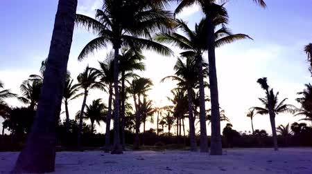 enrolamento : Aerial drone shot. The camera slowly flies between the coconut palms. Beautiful sunset on the coast of the Caribbean Sea. Riviera Maya, Quintana Roo, Mexico Vídeos