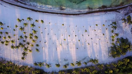 Top down aerial view panning over tropical coconut palms on white sand beach in late afternoon shade on island in the Caribbean Sea. Beautiful sunset. Drone shot