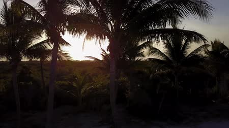 Aerial drone shot. The camera slowly flies over the coconut palms. Beautiful sunset on the coast of the Caribbean Sea. Riviera Maya, Quintana Roo, Mexico.