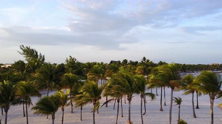 Aerial drone shot. The camera slowly flies above the coconut palms. Beautiful sunset on the coast of the Caribbean Sea. Riviera Maya, Quintana Roo, Mexico. Vídeos