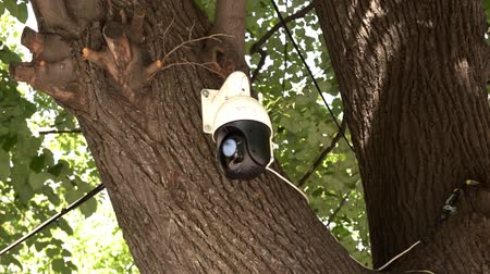 mounted : panning security CCTV surveillance camera mounted on a tree