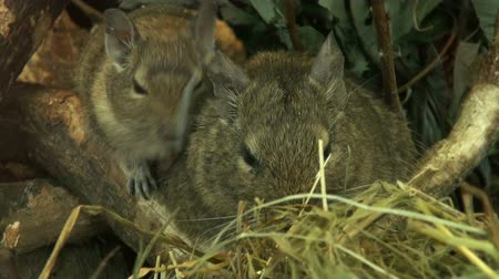 fare : Family of field mice