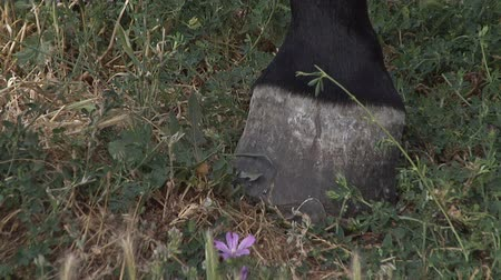 hoofs : Horse hoof on the grass