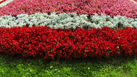 paisagístico : Flowerbed with red flowers