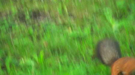 chipmunk : Squirrel jumps on the grass Stock Footage