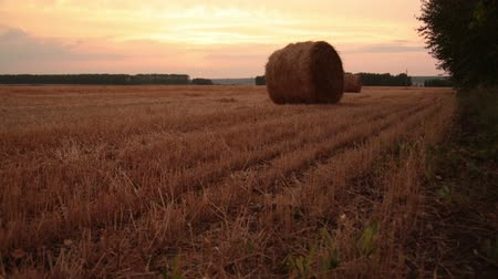 toscana : Rolls of hay in the field Stock Footage