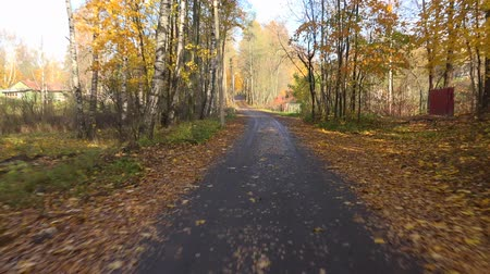 řídit : Autumn forest. Travel by car on the road in the fall. Shot in 4K (ultra-high definition (UHD)