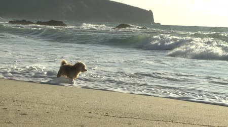 playing with a dog : Puppy dog running in the water Stock Footage