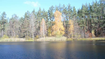 brzoza : fall daylight landscape, autumn forest tree near water