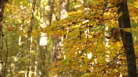 oak forest : Defoliation in the forest