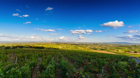 francês : Vineyards of Beaujolais with a sky in Timelapse