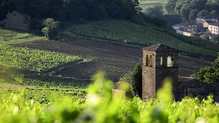 francês : Old church lost in the middle of vineyards Vídeos