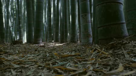 gerekçesiyle : ground of bamboo forest - shifting focus Stok Video
