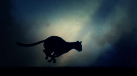 panter : A Black Panther Runs Fast in Loop Under a Lightning Storm at Night