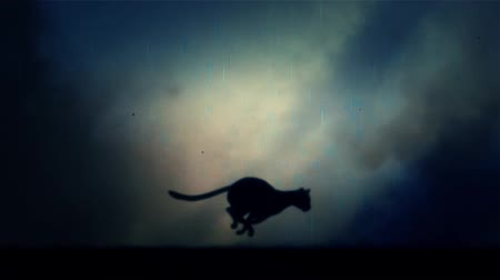 gato selvagem : A Black Panther Runs Fast in Loop Under a Rain and Lightning Storm at Night