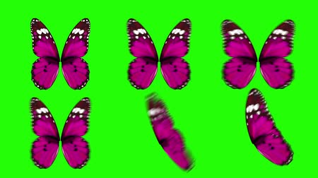 jardim : Set of Pink Butterfly Wings Waving in Different Speed and Angles on Green Screen