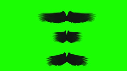 melek : Black Crow Wings Spreading and Waving in Different Rhythm on a Green Screen Stok Video