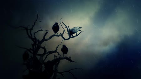 гот : Black Ravens Standing on a Dead Tree in a Middle of a Storm Стоковые видеозаписи