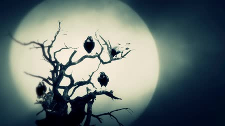 гот : Black Ravens Seating on a Dead Tree on a Full Moon Night Стоковые видеозаписи
