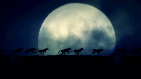 farkas : Small Pack of Wolves Running on a Rising Full Moon Night Stock mozgókép