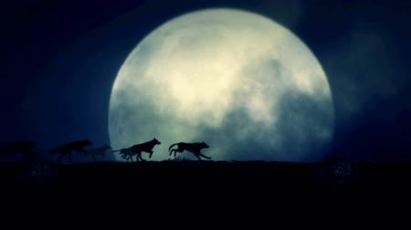 волк : Pack of Wolves Running on a Full Moon Night