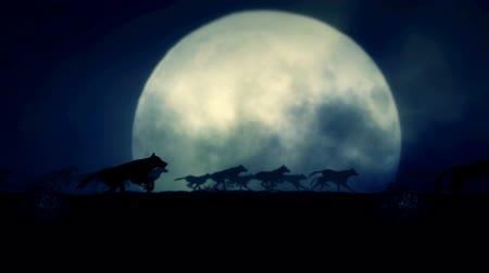 weerwolf : Big Pack of Wolves Running on a Full Moon Night