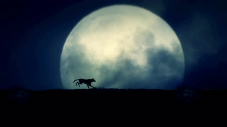 farkas : Wolf Running on a Rising Full Moon Night