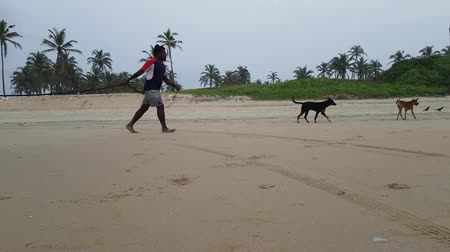 monszun : Dogs And A Bull On The Beach In Goa India