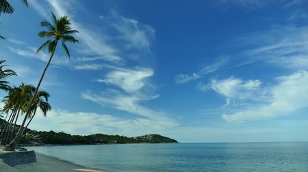 coconut palm tree : Nature with tropical sea and beach on white cloud and blue sky
