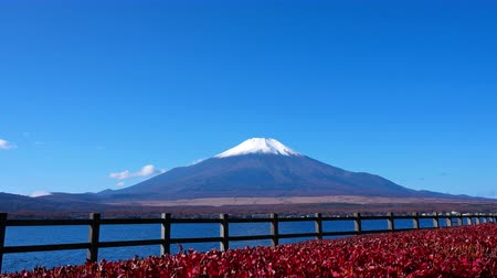 mt : Colorful Autumn with Mountain Fuji in Japan Lake Yamanakako