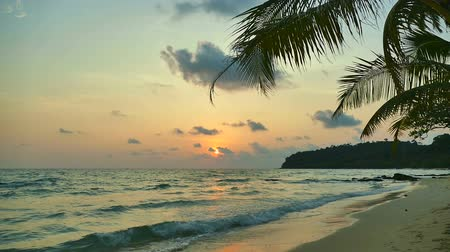 coconut palm tree : Beautiful tropical beach and sea landscape at sunset time